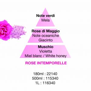 Rose Intemporelle